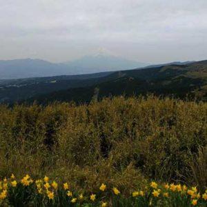 根府川道場の軽登山/十国峠から富士山が望む